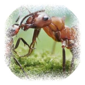 Засоби проти мурах та тарганів